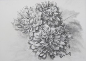 Graphite Chrysanthemums by Kathy Sibley