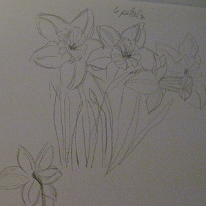 sketch of daffodils  sibstudio