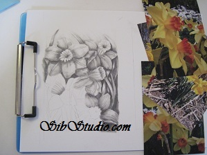 SibStudio dot com Daffodil Drawing