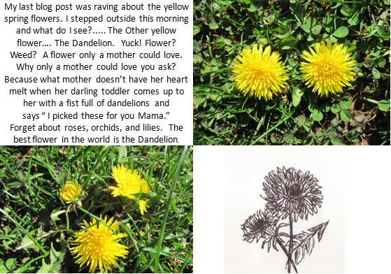 Dandelion Photo & Sketch