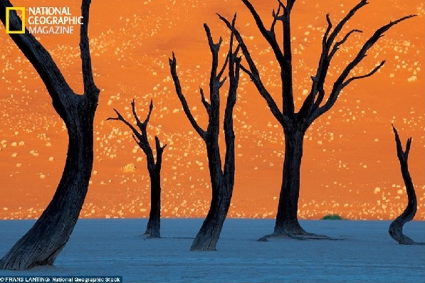 Photo by Frans Lanting of Namib-Naukluft Park for National Geographic