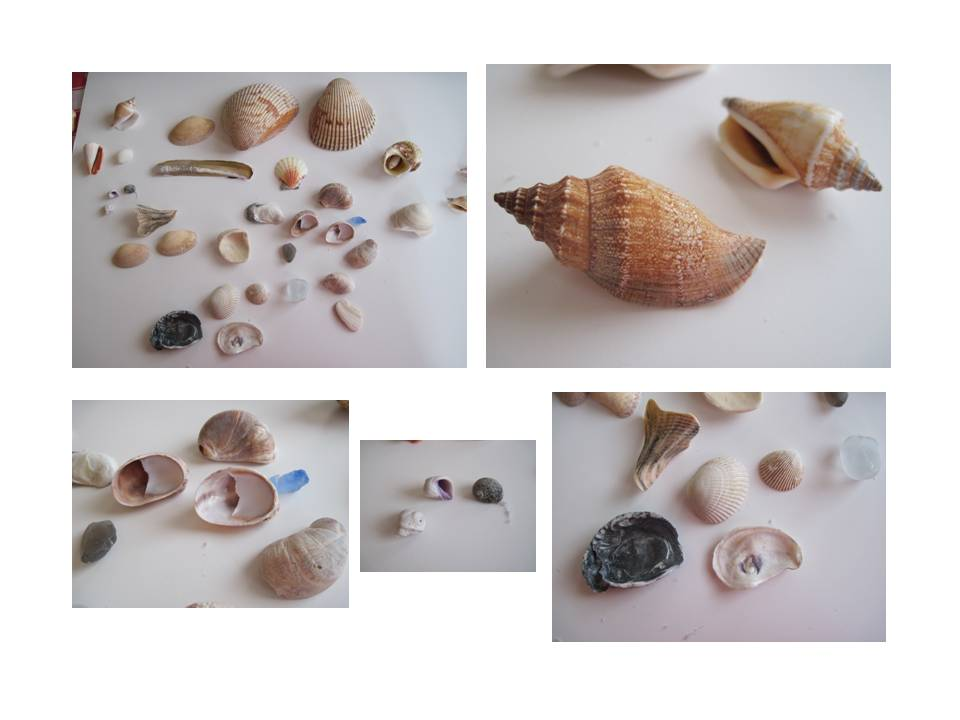 Shell reference photos